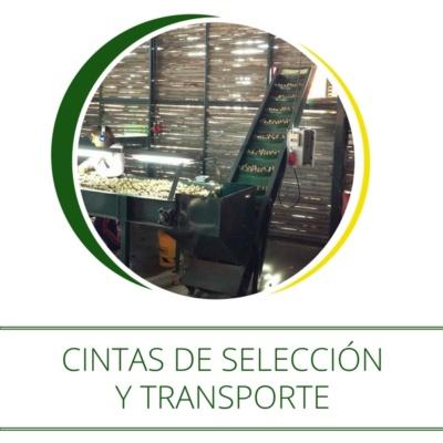 cintas-de-seleccion-y-transporte-maci-1-600px