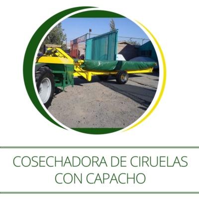 cosechadora-de-ciruelas-con-capacho-repartidor-maci-2-600px