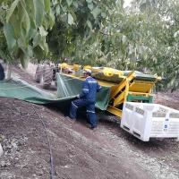 cosechadora-de-frutos-secos-maci-2