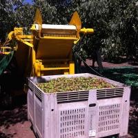 cosechadora-de-frutos-secos-maci-4